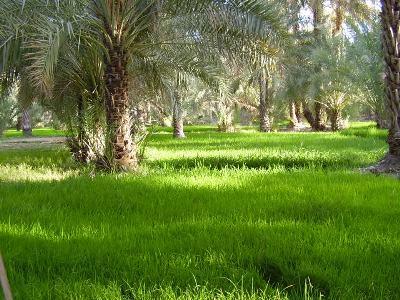 grass-palms.JPG